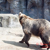 Washington Park Zoo - Michigan City Indiana - #22