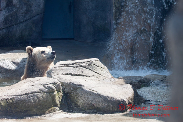 Washington Park Zoo - Michigan City Indiana - #34