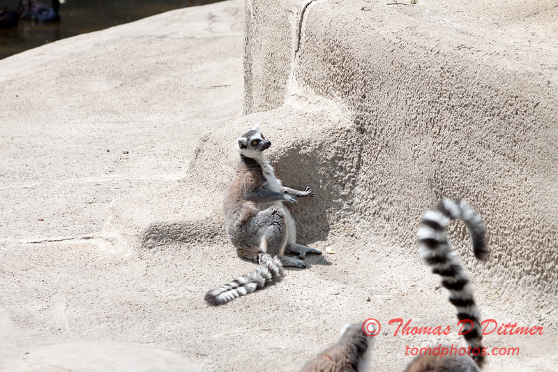 Washington Park Zoo - Michigan City Indiana - #7
