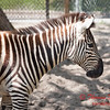 Washington Park Zoo - Michigan City Indiana - #48