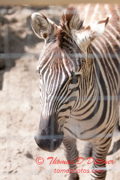Washington Park Zoo - Michigan City Indiana - #52