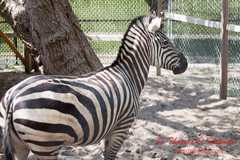 Washington Park Zoo - Michigan City Indiana - #54