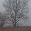 # 3 - Central Illinois tree on a foggy afternoon