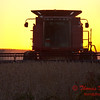 2010 - Combine harvesting soybeans at sunset - 11
