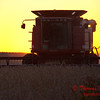 2010 - Combine harvesting soybeans at sunset - 9