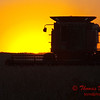 2010 - Combine harvesting soybeans at sunset - 5