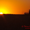 2010 - Combine harvesting soybeans at sunset - 2