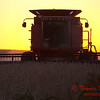 2010 - Combine harvesting soybeans at sunset - 15