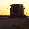 2010 - Combine harvesting soybeans at sunset - 16
