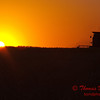 2010 - Combine harvesting soybeans at sunset - 1