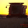 2010 - Combine harvesting soybeans at sunset - 8