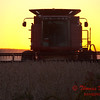 2010 - Combine harvesting soybeans at sunset - 13