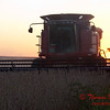 2010 - Combine harvesting soybeans at sunset - 19