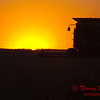 2010 - Combine harvesting soybeans at sunset - 4