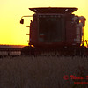 2010 - Combine harvesting soybeans at sunset - 10