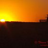 2010 - Combine harvesting soybeans at sunset - 3