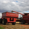 2010 - Bean Harvest - Hudson Illinois - Saturday October 2nd - 37