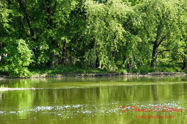 10 - Fox River - Mill Road Park - Oswego Illinois - August 2005