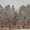 # 21 - Snow falling at Evergreen Lake Hudson Illinois