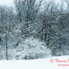 15 - Wooded areas surrounding Lake Evergreen on a snowy day - Northern McLean County Illinois - Monday December 1st 2008