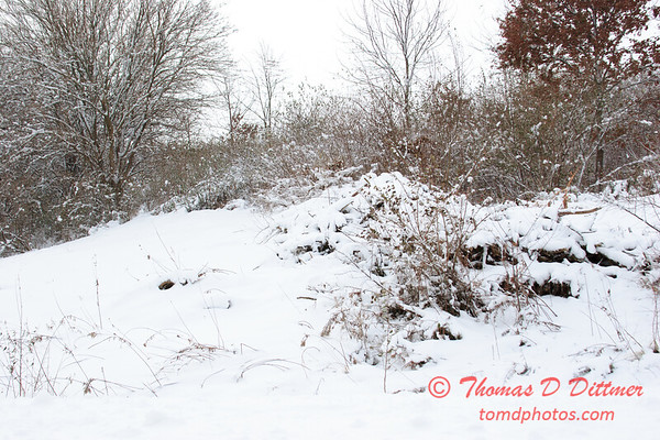 17 - Wooded areas surrounding Lake Evergreen on a snowy day - Northern McLean County Illinois - Monday December 1st 2008