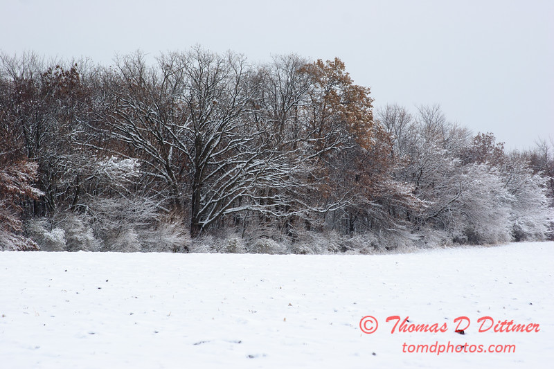 11 - Wooded areas surrounding Lake Evergreen on a snowy day - Northern McLean County Illinois - Monday December 1st 2008