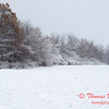 12 - Wooded areas surrounding Lake Evergreen on a snowy day - Northern McLean County Illinois - Monday December 1st 2008