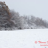 13 - Wooded areas surrounding Lake Evergreen on a snowy day - Northern McLean County Illinois - Monday December 1st 2008
