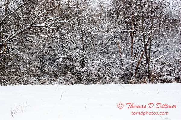 20 - Wooded areas surrounding Lake Evergreen on a snowy day - Northern McLean County Illinois - Monday December 1st 2008