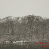 # 10 - Snow falling at Evergreen Lake Hudson Illinois