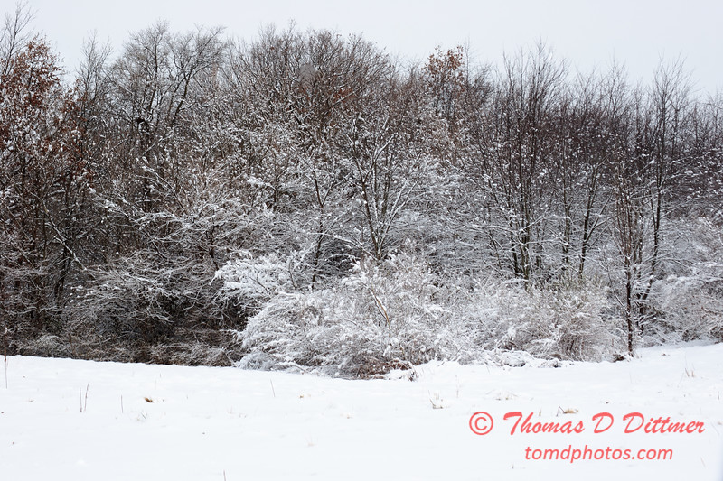 16 - Wooded areas surrounding Lake Evergreen on a snowy day - Northern McLean County Illinois - Monday December 1st 2008