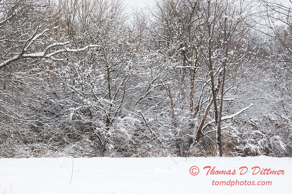 19 - Wooded areas surrounding Lake Evergreen on a snowy day - Northern McLean County Illinois - Monday December 1st 2008