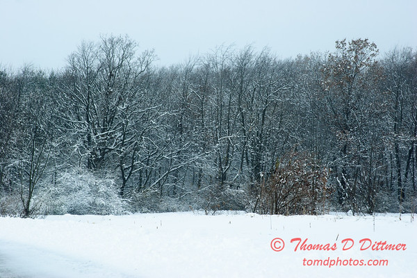 14 - Wooded areas surrounding Lake Evergreen on a snowy day - Northern McLean County Illinois - Monday December 1st 2008