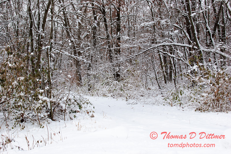 23 - Wooded areas surrounding Lake Evergreen on a snowy day - Northern McLean County Illinois - Monday December 1st 2008