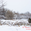 8 - Wooded areas surrounding Lake Evergreen on a snowy day - Northern McLean County Illinois - Monday December 1st 2008