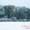 9 - Wooded areas surrounding Lake Evergreen on a snowy day - Northern McLean County Illinois - Monday December 1st 2008