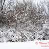 24 - Wooded areas surrounding Lake Evergreen on a snowy day - Northern McLean County Illinois - Monday December 1st 2008
