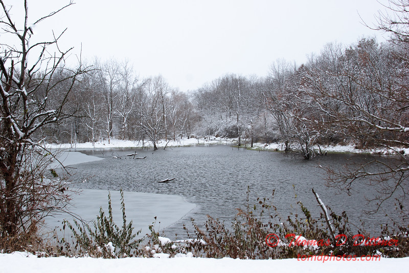 3 - Wooded areas surrounding Lake Evergreen on a snowy day - Northern McLean County Illinois - Monday December 1st 2008