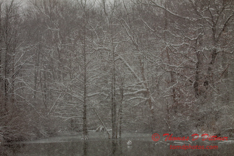# 5 - Snow falling at Evergreen Lake Hudson Illinois
