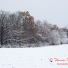 10 - Wooded areas surrounding Lake Evergreen on a snowy day - Northern McLean County Illinois - Monday December 1st 2008