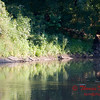 2007 Mackinaw River near Goodfield IL in early August - 16