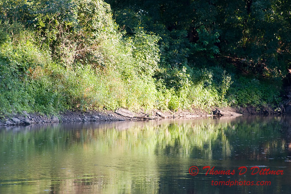 2007 Mackinaw River near Goodfield IL in early August - 17