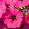 2007 Flowers in Normal IL - 22
