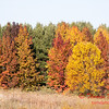 11 - 2014 Autumn colors on display at Evergreen Lake - Hudson Illinois