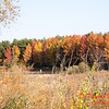 5 - 2014 Autumn colors on display at Evergreen Lake - Hudson Illinois