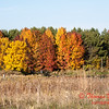 2 - 2014 Autumn colors on display at Evergreen Lake - Hudson Illinois