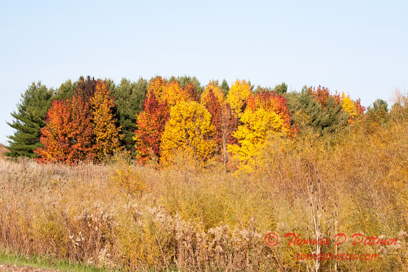 12 - 2014 Autumn colors on display at Evergreen Lake - Hudson Illinois