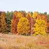 10 - 2014 Autumn colors on display at Evergreen Lake - Hudson Illinois
