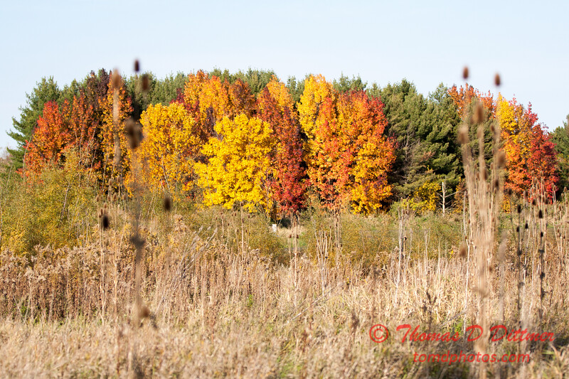 14 - 2014 Autumn colors on display at Evergreen Lake - Hudson Illinois
