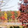17 - 2014 Autumn colors on display at Evergreen Lake - Hudson Illinois